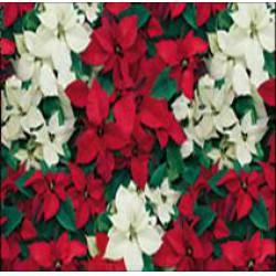 Herlitz - Karácsonyi csomagoló 2mx70cm, tekercses, mikulás virágos - Csomagolópapírok